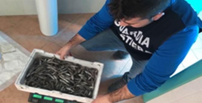 Prodotti ittici sequestrati - Repertorio