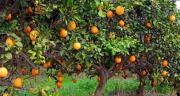 «L'agricoltura calabrese in ginocchio»