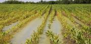 Maltempo: «Danni ingenti all'agricoltura, centinaia gli animali morti»