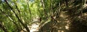 Dipendenti in nero, sospesa azienda boschiva a Fabrizia