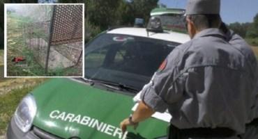 Lamezia, usavano gabbie trappola per catturare animali: due denunciati