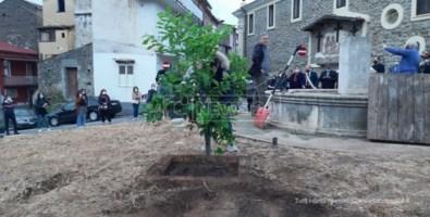 Lamezia, 29 anni fa l'omicidio dei due netturbini: piantati alberi in loro memoria