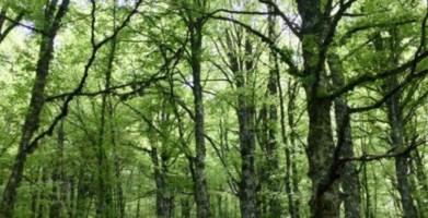Regione Calabria, in arrivo 14 milioni per la valorizzazione delle foreste