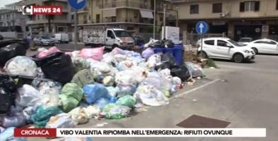 Vibo, uno tsunami di monnezza: città assediata da rifiuti e cani randagi