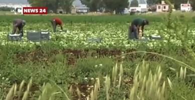 Lavoratori in nero nelle campagne del Reggino, oltre 11mila euro di multe a 3 aziende