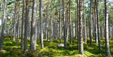 Dalla Regione Calabria 23 milioni per forestazione e prevenzione incendi
