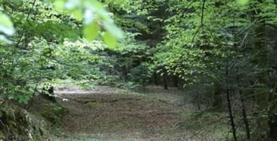Parco delle Serre, nominato il commissario: è Giovanni Aramini