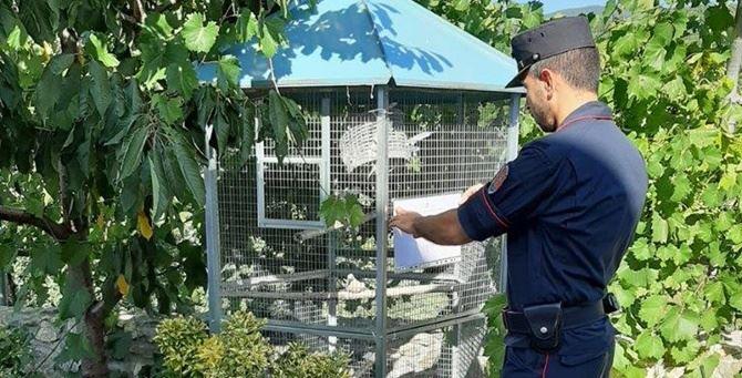Il sequestro delle voliere da parte dei carabinieri forestali
