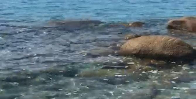 Liquami in mare a Parghelia