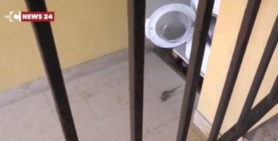 Un topo all'interno di una casa a Pietrapaola