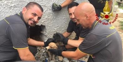 Cagnolina incastrata in intercapedine salvata dai vigili del fuoco nel Lametino