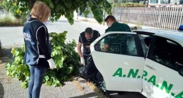 Rifiuti, lotta agli zozzoni a Castrovillari: in meno di due anni 24mila euro di multe