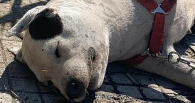 Il cane morto a Cosenza