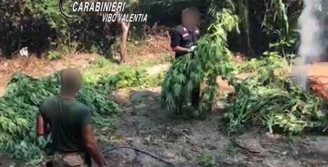 La distruzione delle piante da parte dei militari