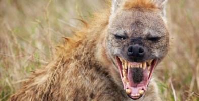 Ridono della tragedia di Crotone: sui social arrivano le iene, quelle vere