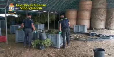 I finanzieri all'interno dell'azienda agricola
