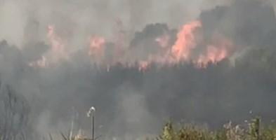Vasto incendio a Nocera Terinese minaccia abitazioni alla Marina