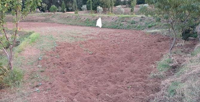 I terreni di Galati devastati dal passaggio dei cinghiali
