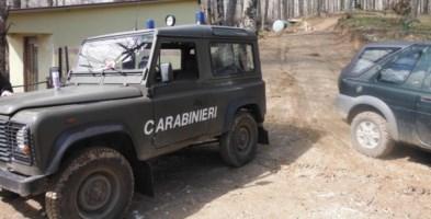 Furto di legname, arrestati 5 uomini: razziavano piante di leccio in una proprietà privata