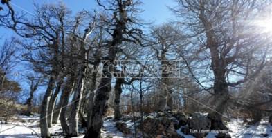 La faggeta di Pollinello si candida a diventare patrimonio Unesco