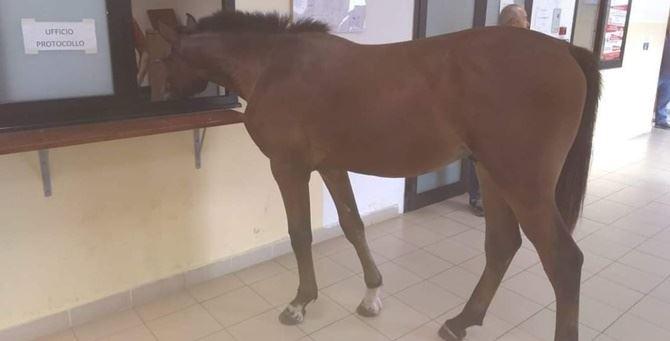 Il cavallo nel Comune di Gioia Tauro