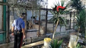 Il canile sequestrato nel Vibonese