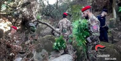 San Luca, scoperte e distrutte due piantagioni di marijuana