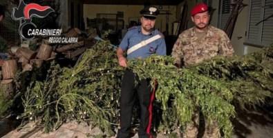 Sorpresi ad essiccare marijuana: due arresti nel Reggino