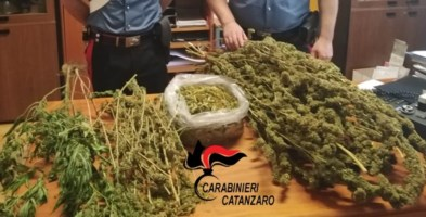 Catanzaro, due piante e quasi due chili di marijuana in casa: arrestato 30enne