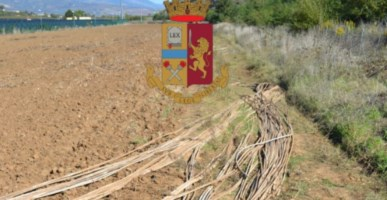 Altomonte, tentato furto di rame in un sito fotovoltaico