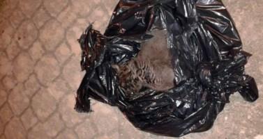 Lamezia, ancora un gatto ucciso: è il terzo in una settimana