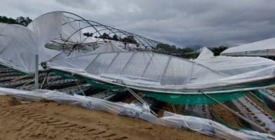 Violenta tromba d'aria si abbatte su Curinga, aziende agricole devastate