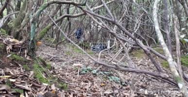 Si scava nei boschi delle Preserre vibonesi alla ricerca di un cadavere
