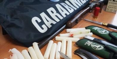 Incendi estivi nel Cosentino, arrestato il responsabile