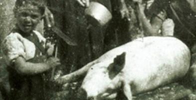 """""""Scannari u porcu"""", l'uccisione del maiale nella tradizione calabrese"""