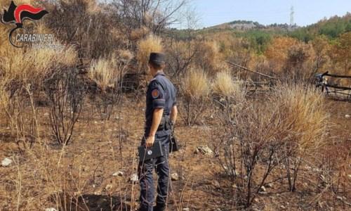 Cariati, incendiano bosco per far pascolare gli animali: denunciati due fratelli