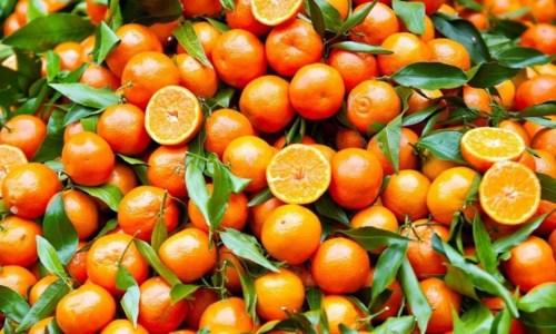 """Piccole ma buonissime, le clementine calabresi conquistano l'Italia con la """"promo"""""""