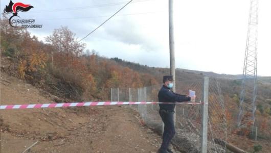 Acri, taglio abusivo di alberi: sequestrata area di 20mila metri quadri