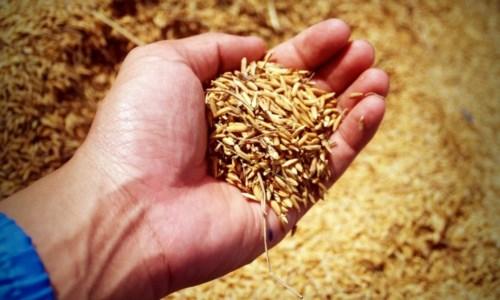 Regione Calabria, in arrivo 10mln di euro per l'agricoltura: più di 11mila i beneficiari