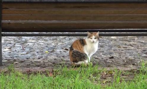 Lamezia, adozione a distanza per sostenere e proteggere gatti randagi