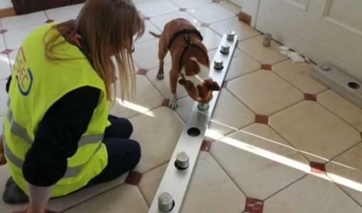 L'addestramento dei cani, foto ansa