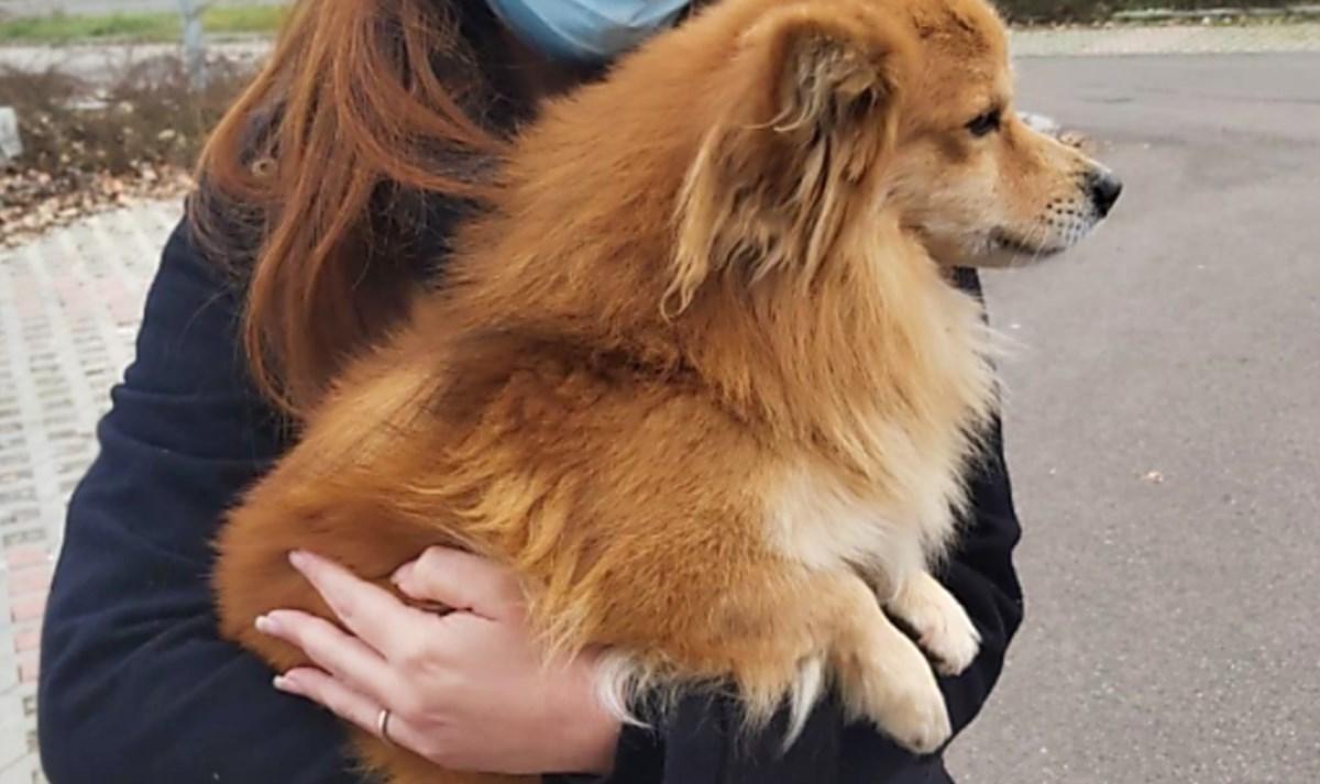 L'arrivo del cane adottato