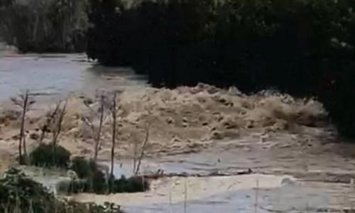Corigliano-Rossano, il Crati esonda e fa paura: agrumeti sott'acqua e aziende a rischio