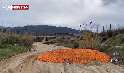 Corigliano-Rossano, carcasse di animali e clementine invendute gettate nel torrente Gennarito