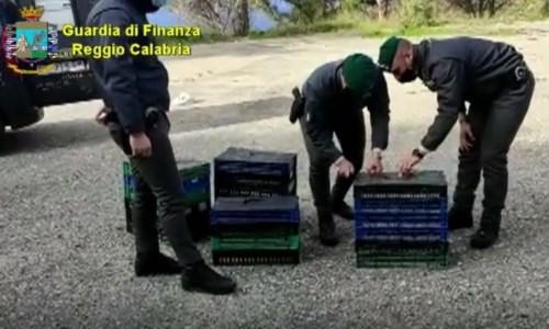 Reggio, rinvenuti in un furgone mille uccelli di specie protetta: denunciato 68enne