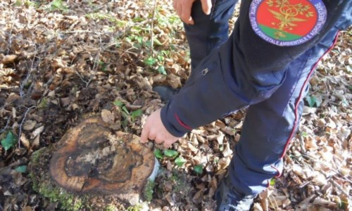 Truffa nella compravendita di un lotto boschivo: 2 denunce nel Vibonese