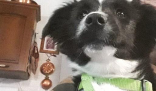 Il padrone si ammala di Covid e per due mesi il suo cane lo aspetta davanti casa