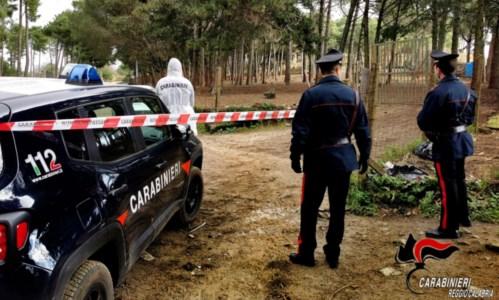 Reggio Calabria, allevatore tenta di uccidere il figlio con un coltello da macellaio: arrestato