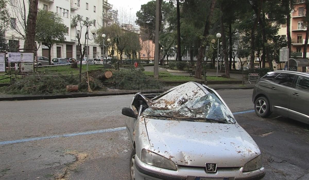L'auto parcheggiata in centro a Cosenza distrutta dal crollo di un albero