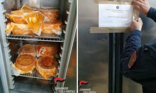 Sequestrati 120 chili di formaggi senza etichetta nel Vibonese, multa da 1500 euro